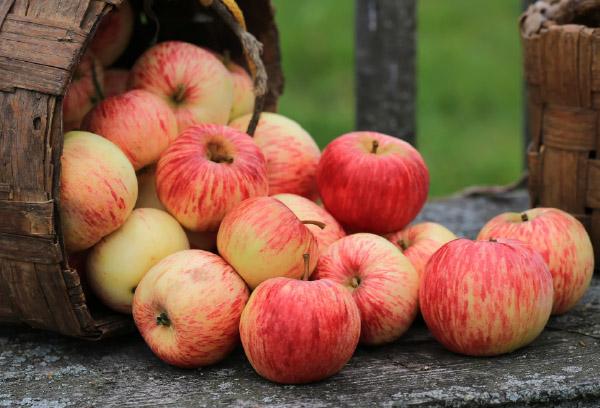 Varietal Tree Fruits